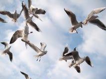 fulla seagullsskies Royaltyfri Foto