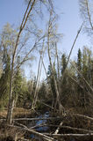 Fulla träd Arkivbilder
