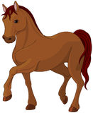 Fullblods- häst Fotografering för Bildbyråer