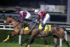 fullföljandehästkapplöpning royaltyfri fotografi