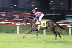 fullföljandehästkapplöpning Royaltyfria Foton