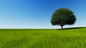 FullHD Tree on a green hill on clear sky stock video footage