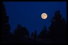 Fullmåne över träd royaltyfri foto