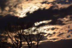 Fullmåne bak guld- natthimlar och spöklika träd Arkivfoto