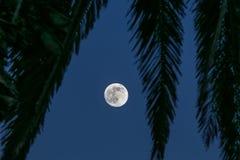 Fullmåne i paradis Fotografering för Bildbyråer