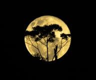 Fullmåne med träd arkivfoto