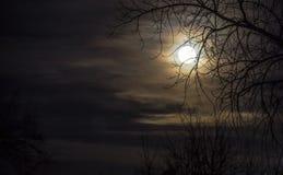 Fullmåne närmast höstdagjämningen Royaltyfri Fotografi