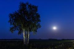 Fullmåne- och björkträd arkivfoton