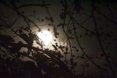 Fullmånen är bak konturn av trädet arkivbilder