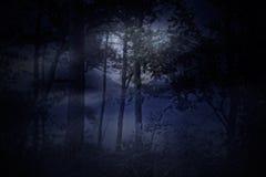 Fullmånen stiger över en skog på en dimmig natt royaltyfri foto