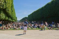 fullsatt trädgård Royaltyfri Foto