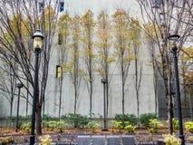 Fullständiga träd i parkera royaltyfri foto