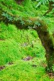 Fullständigheten av skogen Arkivfoton