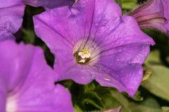 Fullständigt blommad blomma Royaltyfria Foton