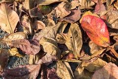 Fullt blad för färg på jordningen Royaltyfri Foto