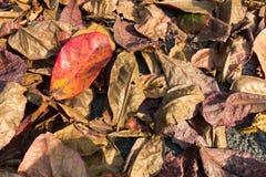 Fullt blad för färg på jordningen Arkivfoto