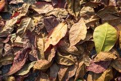 Fullt blad för färg på jordningen Arkivbild