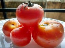 fullt djup f?r nya r?da mogna tomater av f?ltet royaltyfri fotografi