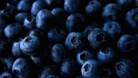 Fullt rambruk för blåbär för bakgrund lager videofilmer