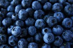 Fullt rambruk för blåbär för bakgrund Fotografering för Bildbyråer