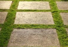 Fullvuxen gräsmatta och kritiserar uteplatsen Royaltyfri Bild