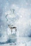 Fullvuxen hankronhjort i ett snöjordklot Royaltyfria Foton