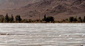 Fullvuxna under-folietunneler för tomater och för aubergine i Jordan Desert arkivbild