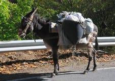 Fully laden donkey Stock Image