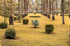Fully planted palm trees grow evenly along the corridors in Montesa National Park. In Alexandria stock photos