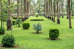 Fully planted palm trees grow evenly along the corridors in Montesa National Park. In Alexandria stock image