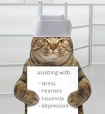 Cat vet 2. The fully qualified cat vet is holding a sign that say `assisting with : stress, neurosis, insomnia, depression`. He wears a white medical cap royalty free stock photo