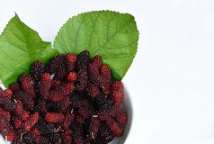Mulberry fruit Stock Image