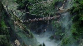 Fumée écartant entre les mousses et les tronçons putréfiés Tronçon d'arbre dans la forêt avec de la mousse clips vidéos