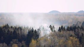 Fumée brûlante de forêt au-dessus des arbres banque de vidéos