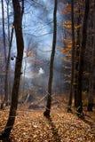 Fumée dans la forêt Images stock