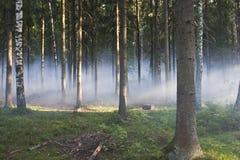Fumée dans les bois Photos stock