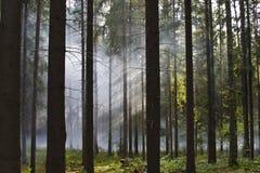 Fumée dans les bois Photo stock
