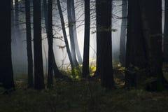 Fumée dans les bois Photographie stock