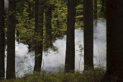 Fumée dans les bois Image libre de droits