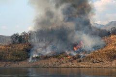 Fumée du feu de forêt dans le forrest images stock