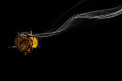 Fumée et Rose Images libres de droits