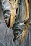 Fuma a Salmon Hanging Fotografía de archivo