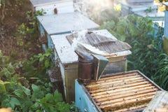 Fumador de la abeja que fuma en la apicultura estacional de las abejas de la miel del copyspace del colmenar que cultiva la produ Imagenes de archivo