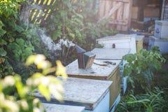 Fumador de la abeja que fuma en la apicultura estacional de las abejas de la miel del copyspace del colmenar que cultiva la produ Fotografía de archivo libre de regalías