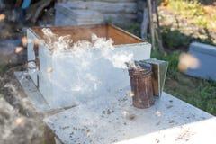 Fumador de la abeja que fuma en la apicultura estacional de las abejas de la miel del copyspace del colmenar que cultiva la produ Imagen de archivo libre de regalías