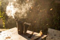 Fumador de la abeja que fuma en la apicultura estacional de las abejas de la miel del copyspace del colmenar que cultiva la produ Foto de archivo