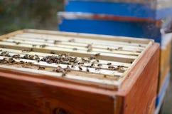 Fumador de la apicultura en la colmena de la abeja Miel de Gettong de la colmena Fotos de archivo libres de regalías