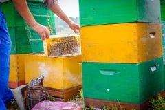 Fumador del ` s del apicultor funcionando en la apicultura Fotos de archivo libres de regalías