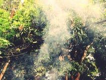 fumare Fotografie Stock