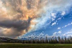 Fumée du feu de forêt Photos libres de droits